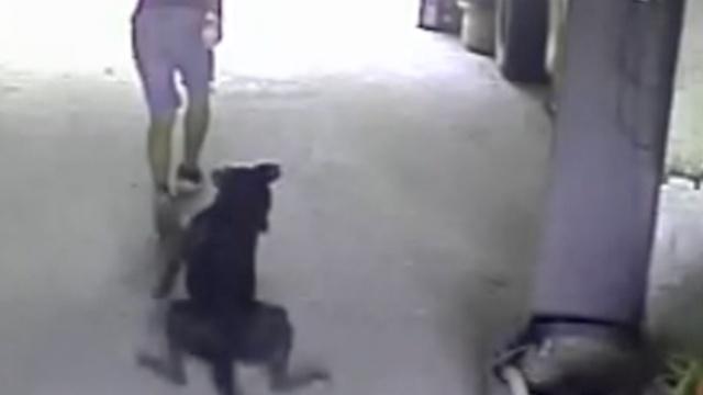 惊!团伙疯狂偷狗偷藏獒,吓跑保安