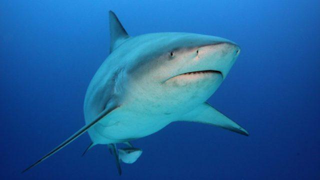 鲨口逃生!澳洲潜水客遇惊险一幕