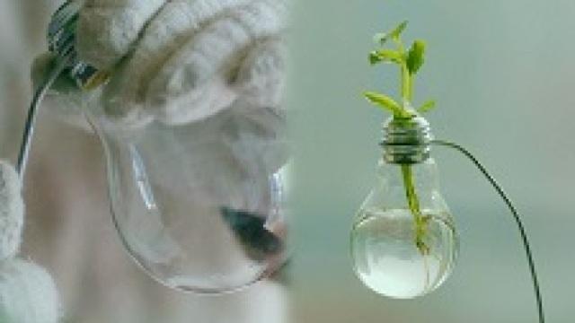 灯泡大改造,轻松变身植物花器