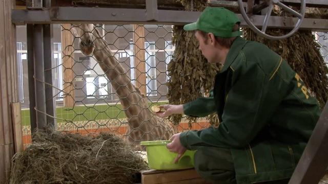 残酷的动物园!西伯利亚养热带动物