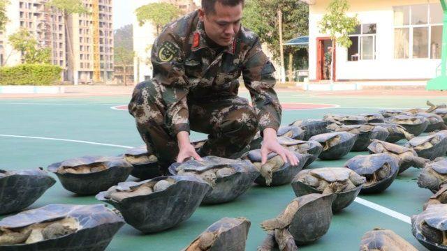 疯狂!70只走私亚洲巨龟藏身出租屋