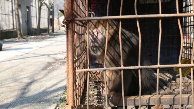 三个奇葩动物园游记:老虎骨瘦如柴
