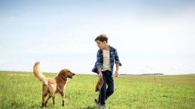 这些电影中的忠犬:别让它们等太久