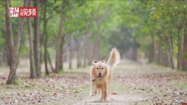 杭州小区物业禁止养宠物政策引争议