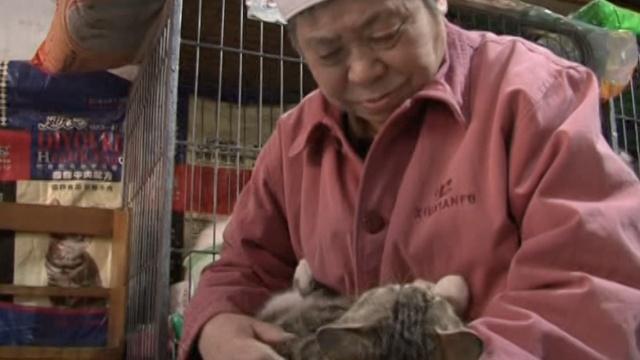 她收养40流浪猫:让它们有尊严活着