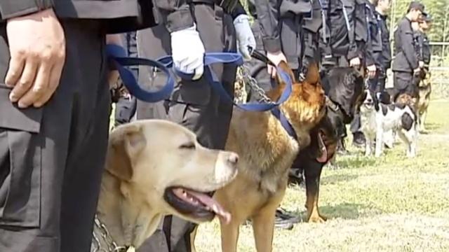 搜捕搜爆,看看这些警犬如何比武