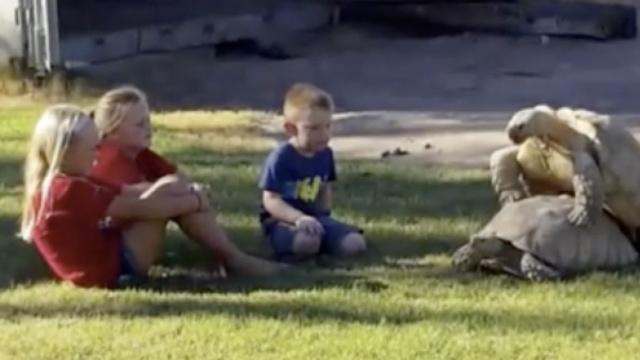 好尴尬!乌龟啪啪啪被熊孩子围观