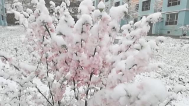 -8℃!新疆5月飞雪,气温如坐过山车