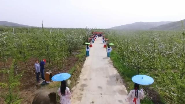 航拍:万亩苹果花绽放,探秦皇故里