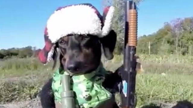 宠物遭花式变装:狗驾坦克,猫开屏