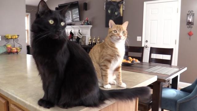 7件事告诉你:猫咪是真正的科学家