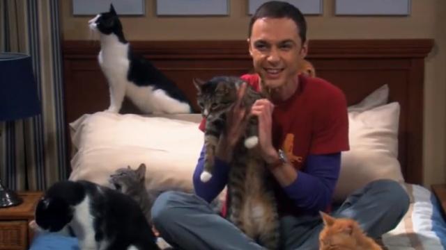 科学研究证明:养猫容易找不到对象