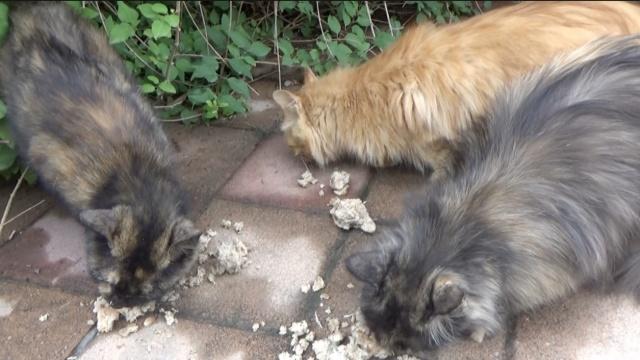 暖!大妈坚持喂流浪猫2年,风雨无阻
