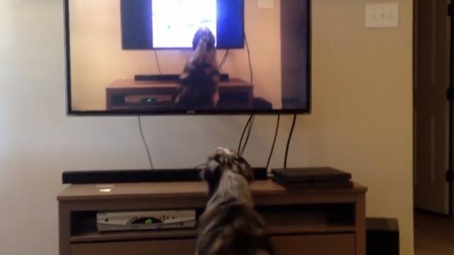狗狗看见电视里的自己,一脸懵圈