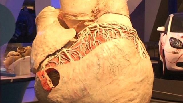 世界上最大的心脏将在博物馆展出