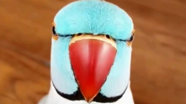 发现被偷拍,鹦鹉竟冲着相机嗨起来