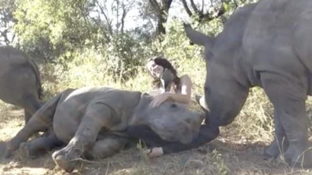 胖犀牛躺姐姐腿上撒娇,美女尴尬了