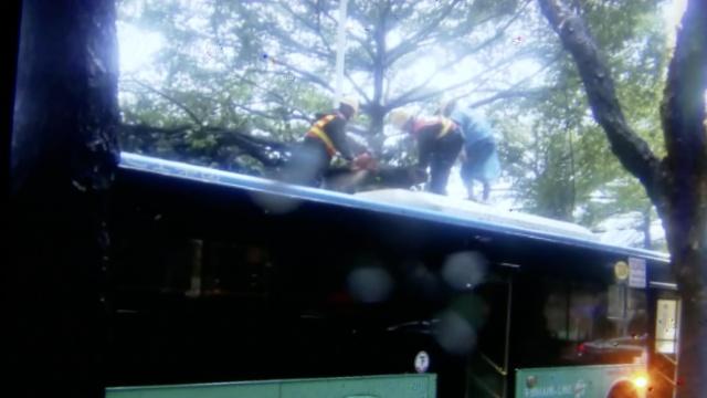 强台风吹倒大树,砸中2辆行驶中公交