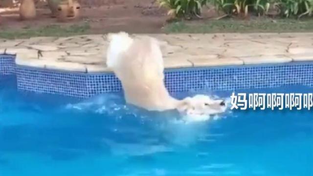 岸边学游泳更科学,不信看这狗子