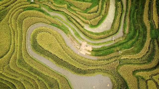 贵州榕江带状梯田,犹如大地指纹