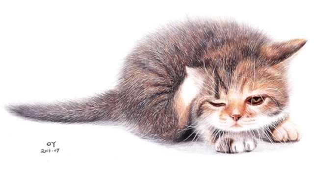 OY原创彩色圆珠笔画-猫
