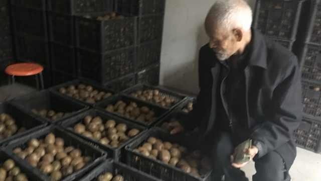 76岁果农回故乡卖猕猴桃,7千斤滞销