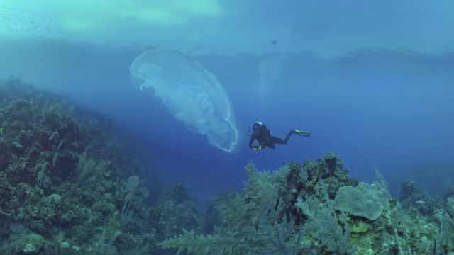 美!深海潜水,水母就在手边绽开