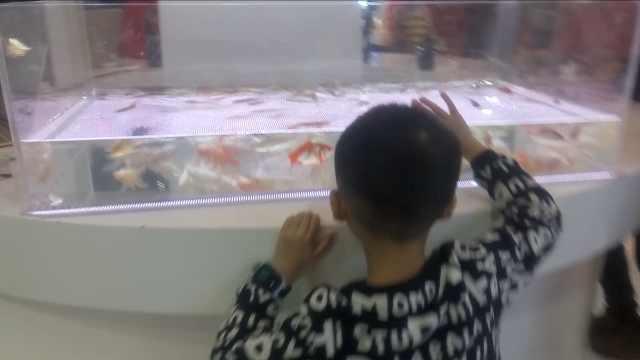 晚安,重庆|找不同,看看哪条是真鱼