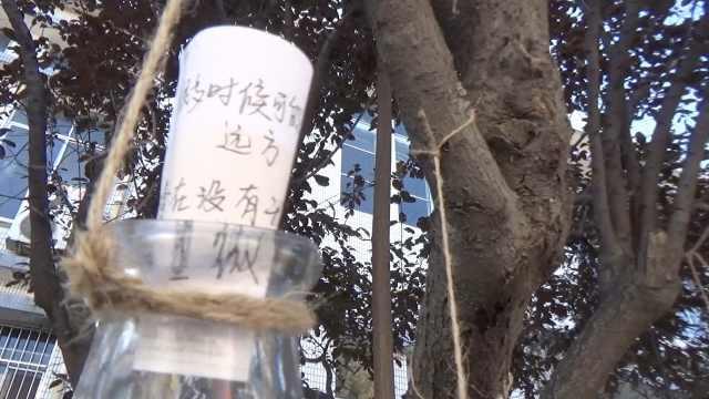 大学树上挂满漂流瓶,每瓶都有故事