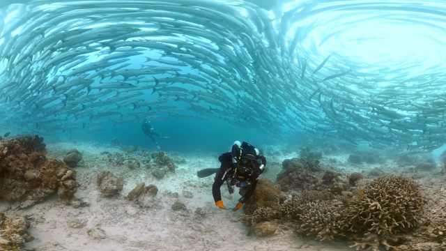 震撼!小哥下海潜水,被鱼群包围