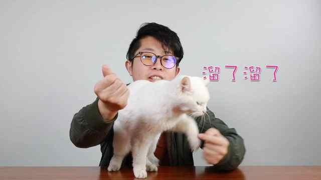 魔术师小哥遭遇滑铁卢竟是因为猫!