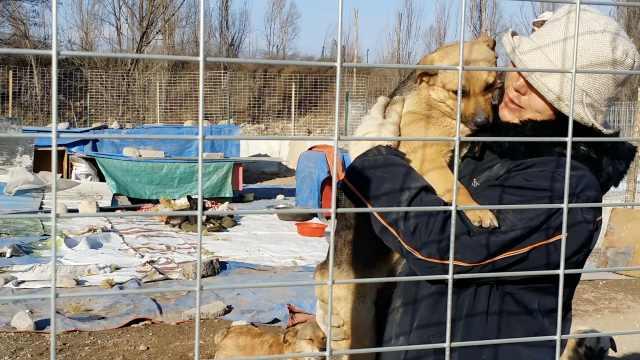 她10年收养300流浪狗,每月花数千元