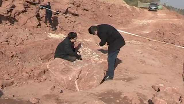 20多枚恐龙蛋化石现世,距今1.3亿年