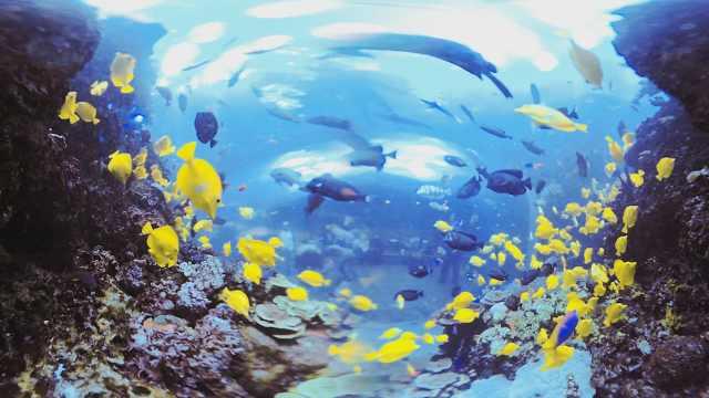 水族馆这群小黄鱼,像移动的银杏叶