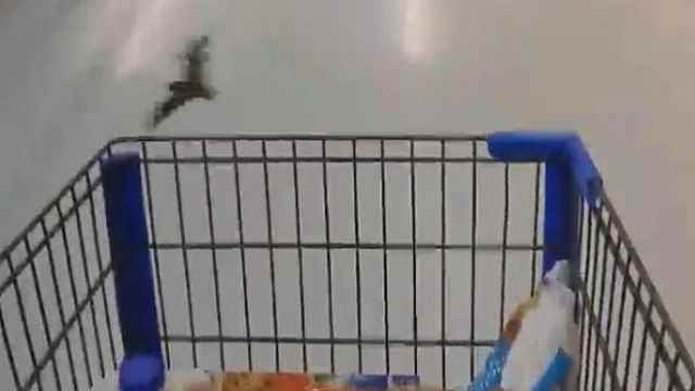 沃尔玛超市惊现蝙蝠群,冷藏区乱飞