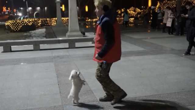 小狗陪主人跳广场舞,踩步点会转圈