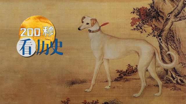 中华田园犬,竟有如此狂野的历史!