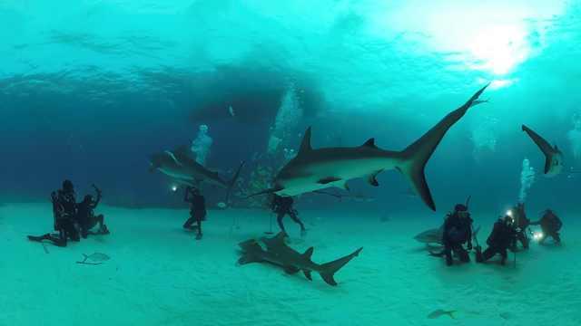 太惊险!小哥深海潜水,与鲨鱼擦肩