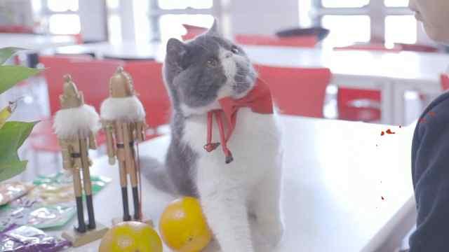 撩妹技术不行怪猫?猫:这锅我不背