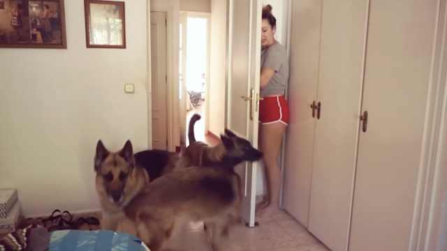 和宠物玩捉迷藏,它们的反应超好笑