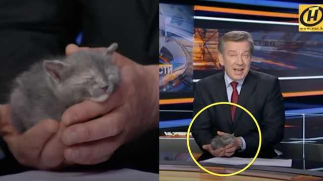 男主播手握小猫播新闻,原因暖心