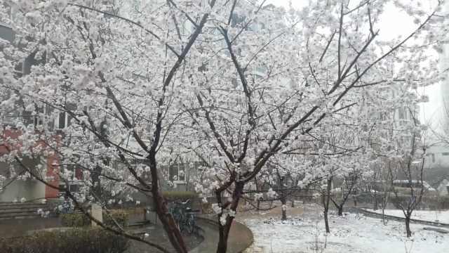 承德4月忽飘雪,网友:遇到了假春天