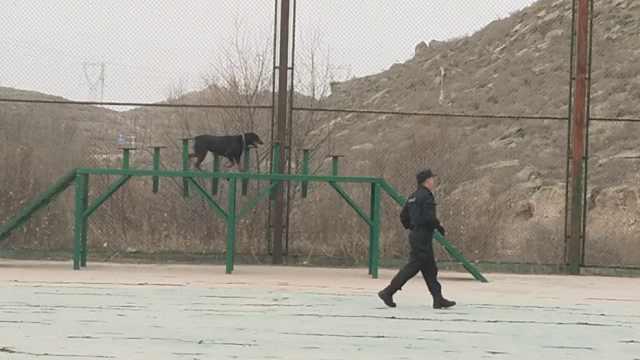 1人1犬1座山!揭秘警犬训导员的日常