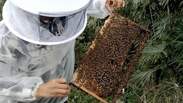 大1男生卖蜂蜜从不旷课,赚钱买了车