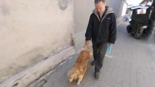 大爷攥狗狗后腿遛弯,常被误会虐狗