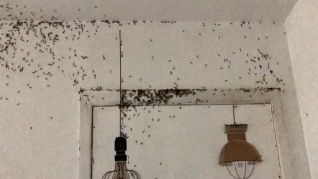 出租屋爬满白蚁,租客称像身处地狱