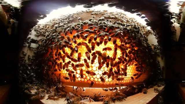 密密麻麻!VR镜头下的蜂巢看着眼花