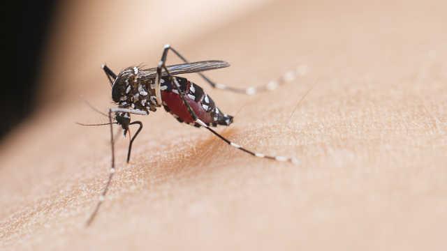 杀一只越冬蚊,等于消灭千只蚊二代