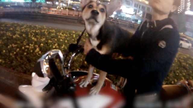 他骑摩托遛狗被拦,警察:气死我了