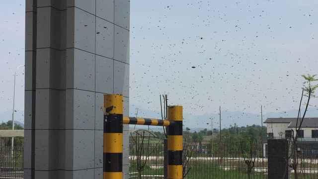 上万蜜蜂滞留收费站!货车却跑了